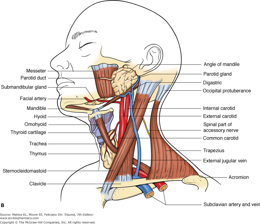 sternocleidomastoid muscles - Google Search | Step 1 | Pinterest