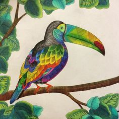 Toucan Coloring Finished