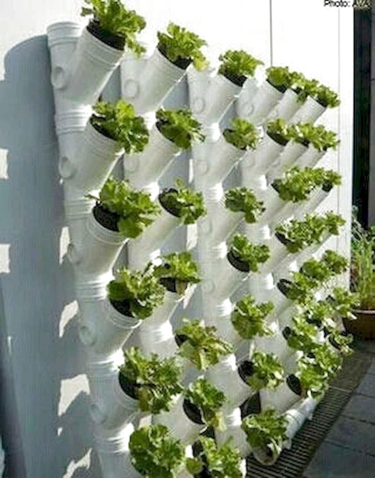 53 Favourite Vertical Garden Design