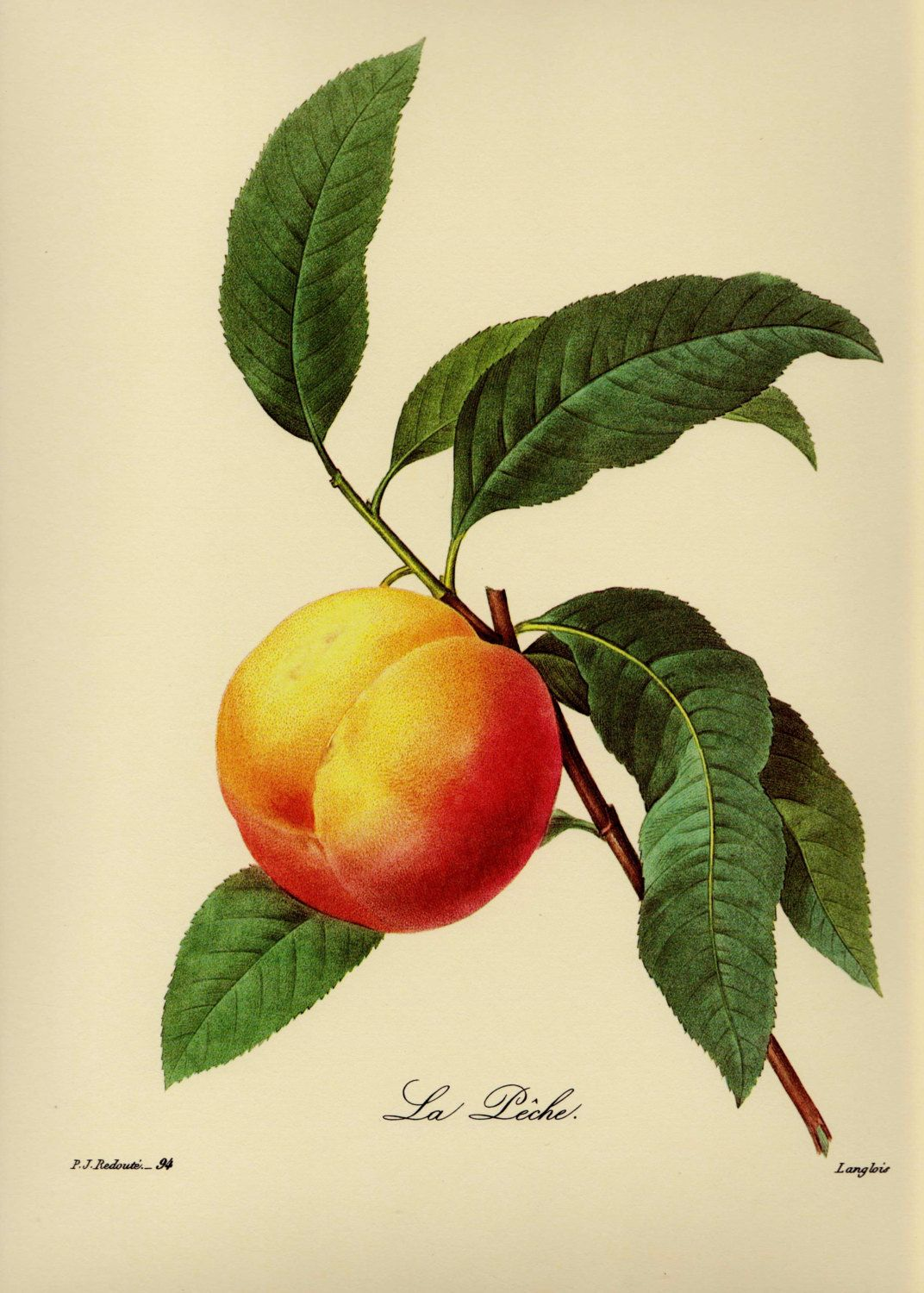 French Country Kitchen Print Vintage Peach Fruit Print Redoute ...