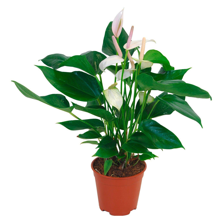 Einzigartig Pflanzen Online Bestellen Ideen