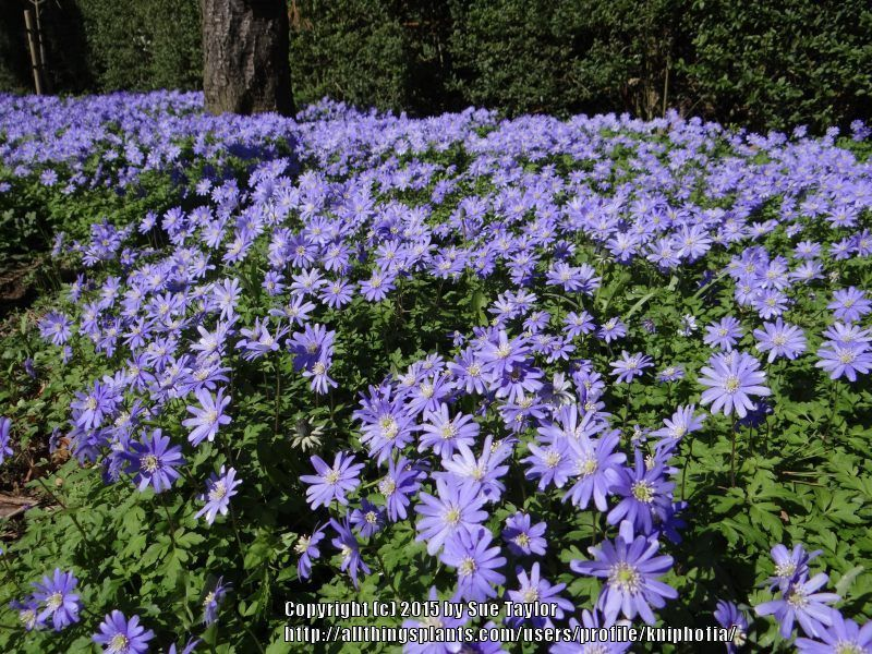 Pin On Linnen Loop Flowers