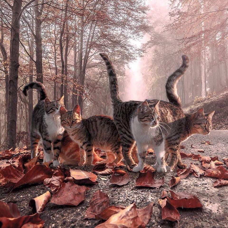 Suzanne Pardue on Crazy cats, Cute cats