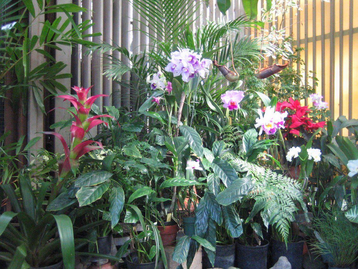 Honoluluu0027s Foster Botanical Garden