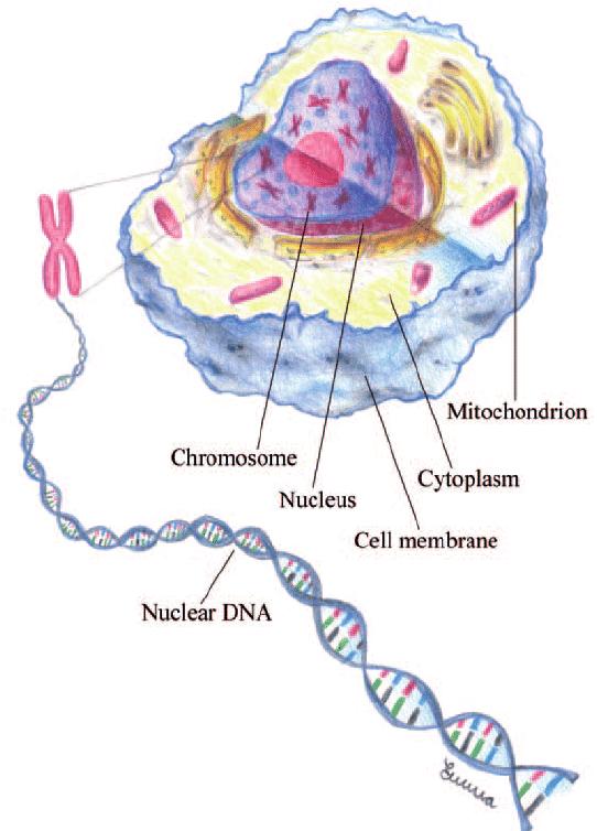 收藏到 mitochondria