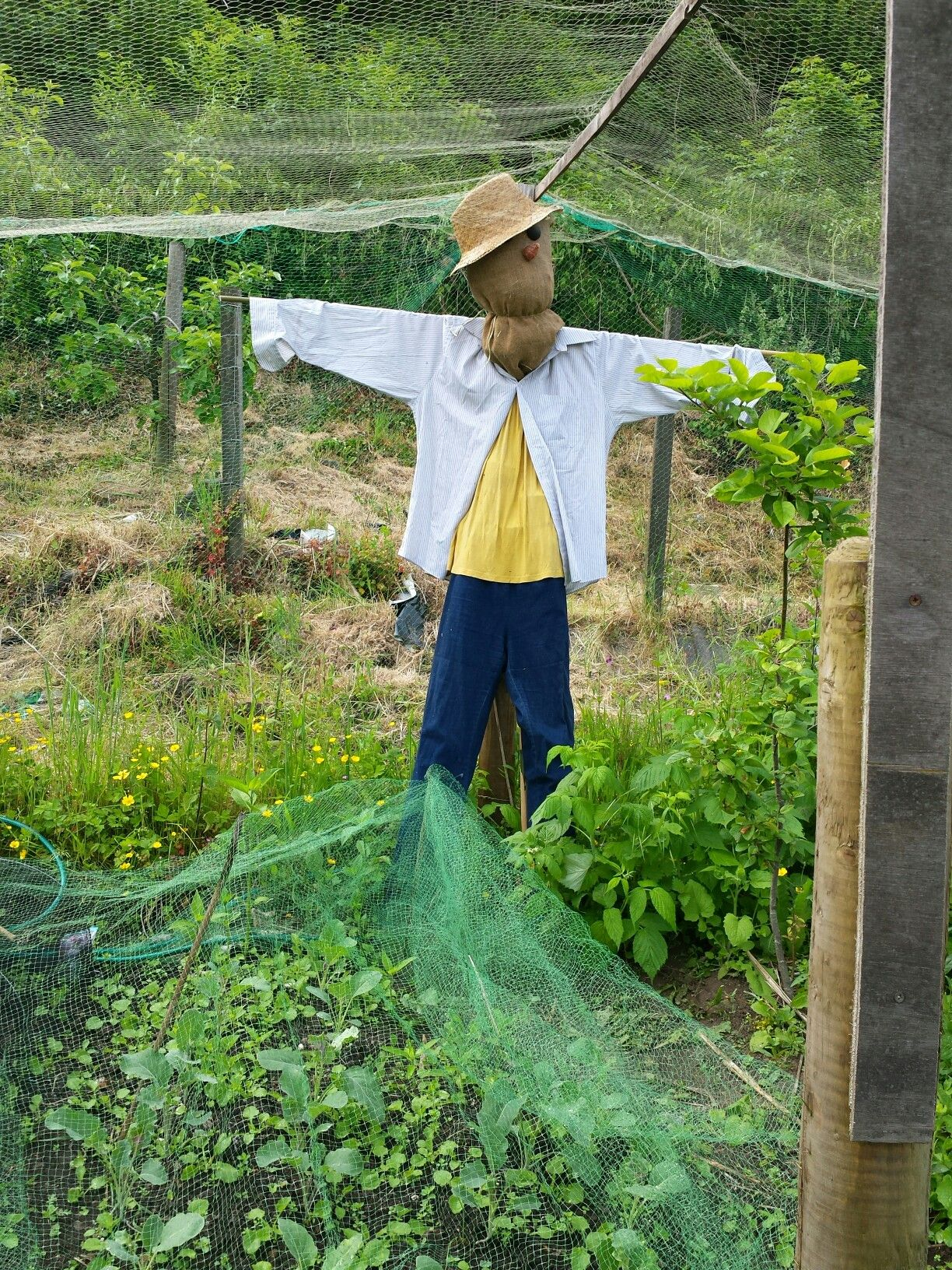 My new garden scarecrow 2016
