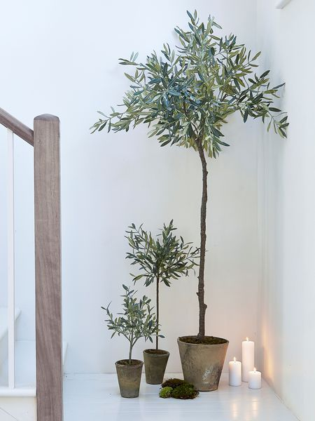 Extra Large Faux Olive Tree | Gray green, Gray and Plants