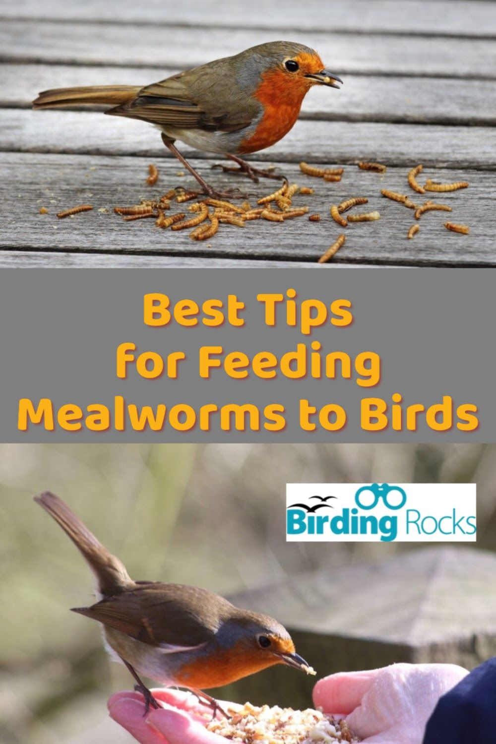 Feeding Mealworms to Birds – Full Guide with Tips