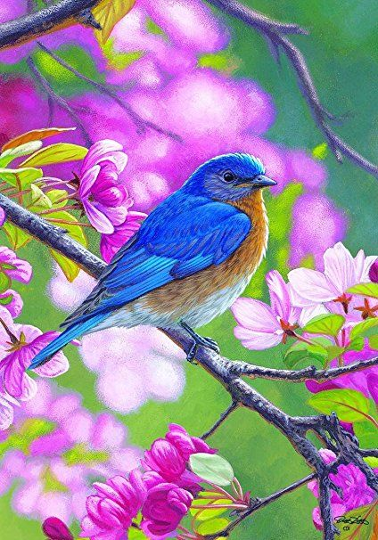 Quot Blue Bird Branch Quot Spring Summer Standard Size 28 Inch X 40 Inch Decorative Double Sided Flag Licensed Bird Pictures Bird Art Bird Drawings