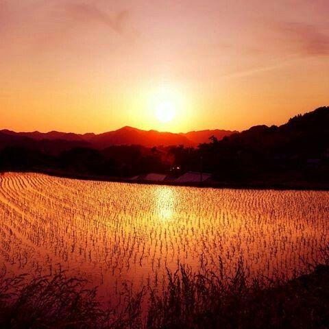 千葉 大山千枚田 夕焼け 夕やけ 日暮れ 風景 美しい景色 夕焼け