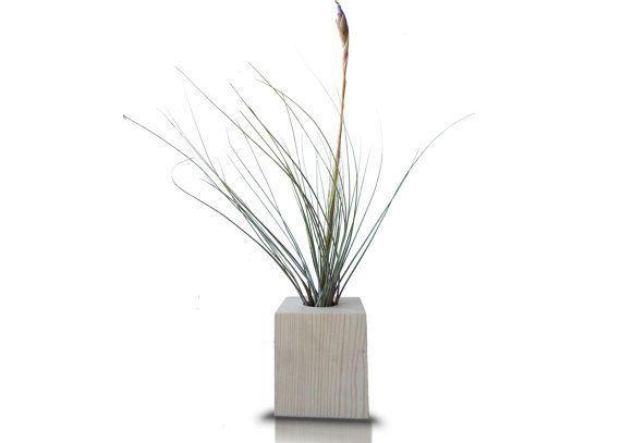 #minimalist #plantsair #planter #indoor #stands #airair #plant #house #gift #livePlant Minimalist Pl...