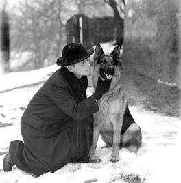 Jo De Meyere Wikipedia Dog Life Shepherd Dog Dogs