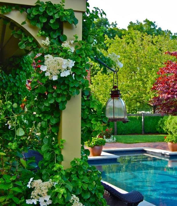 kletterpflanzen blumen rosa pandorea weiße blüten säulen,
