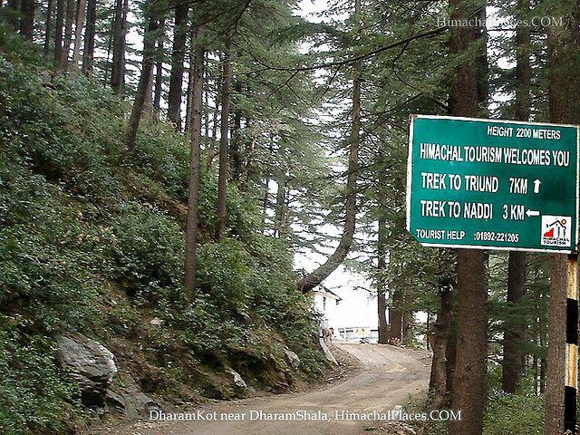 Dharmashala treks