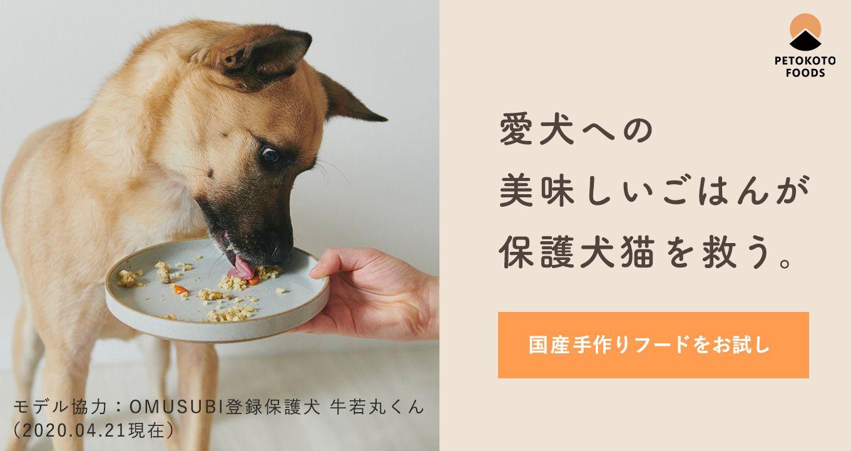 犬の里親募集情報 Omusubi 審査制の保護犬猫マッチングサイト 犬 里親 保護
