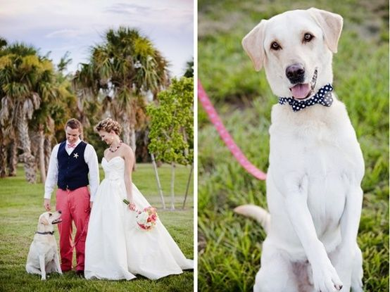 On Your Wedding Day By Unknown: How Cute Is This Dog In A Bow-tie?! Looking For A Bow-tie