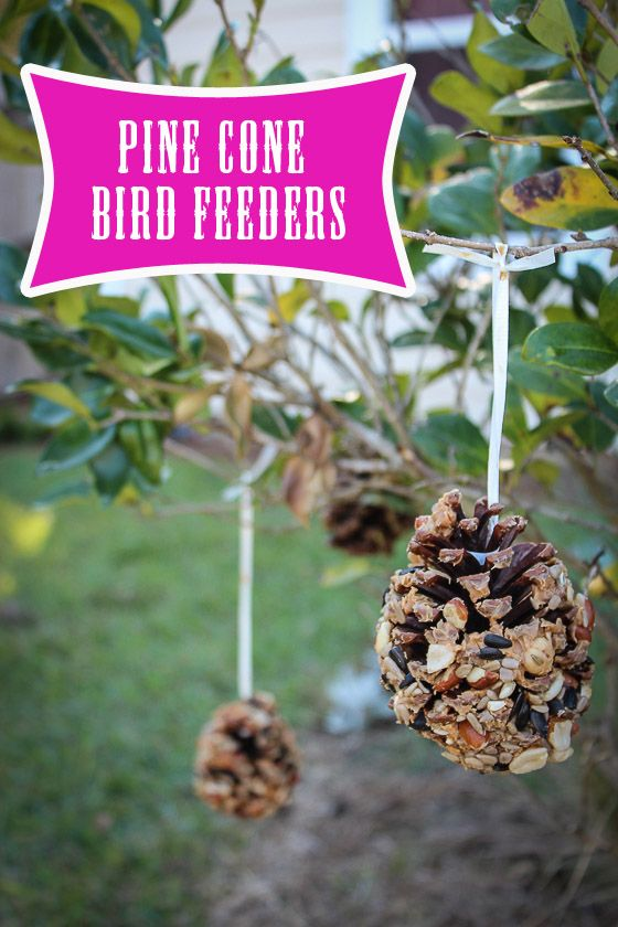 Pine Cone Bird Feeders Pine Cone Bird Feeder Bird Feeders