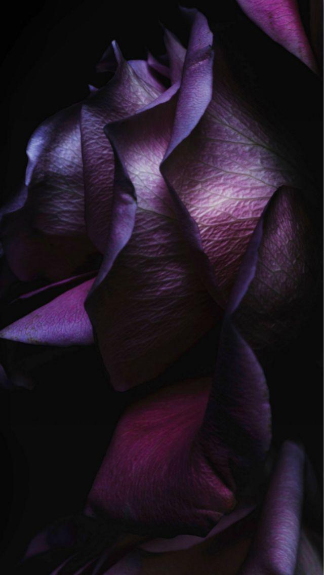 Dark Purple Elegant Rose Petal Macro Ios9 Wallpaper Art Iphone