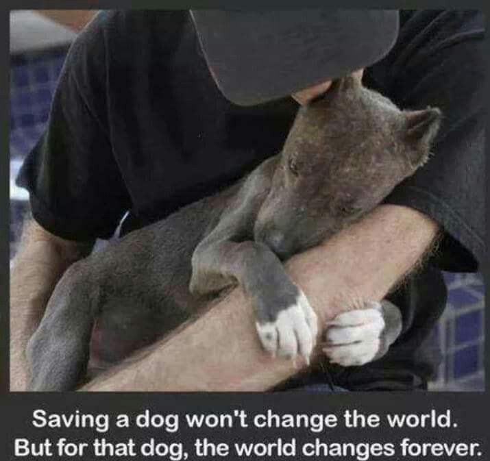 ☆Save a dog won't change the world. But for the dog, the world change forever. 🙏💓