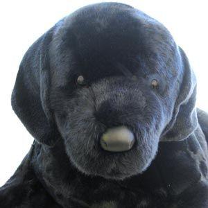 Large Stuffed Black Lab Is 40 Long As