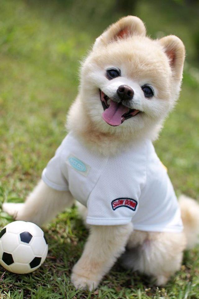 Soccer Dog So Cute Cute Dogs Cute Animals
