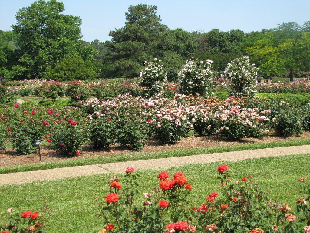 norfolk botannical gardens | Norfolk Botanical Rose Garden | Norfolk ...