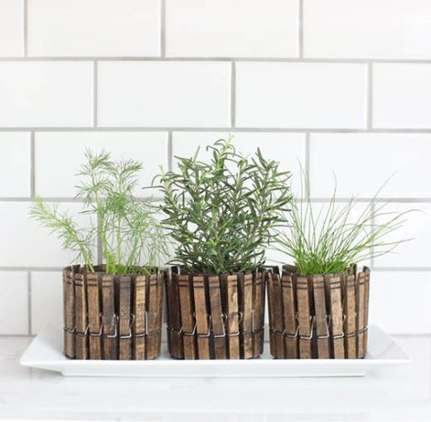 Anyone Can Grow Herbs With This Super-Helpful Chart