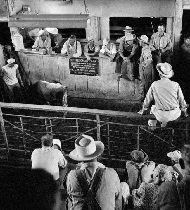 vintage livestock auctions | Home / Photos / Era / 1950s