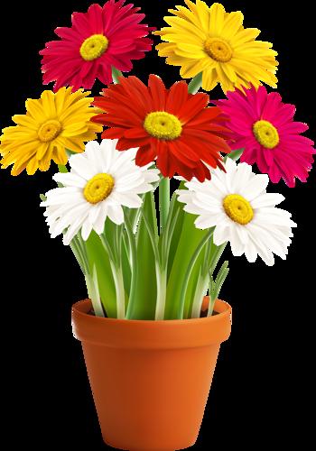 Shutterstock  преобразованный garden