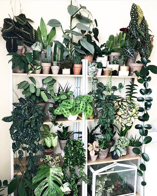 """Photo of The Potted Jungle on Instagram: """"On a scale of 1 to rob a plant store, how des…"""
