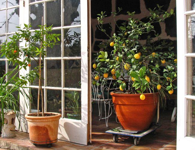 Epingle Sur Orangers