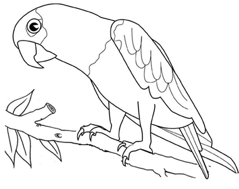 Macaw Parrot Bird Coloring Page In 2020 Bird Coloring Pages Animal Coloring Pages Coloring Pages