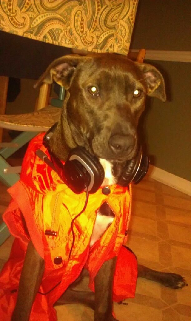 Meradith is the coolest MC  Plott Hound ever! #plotthound
