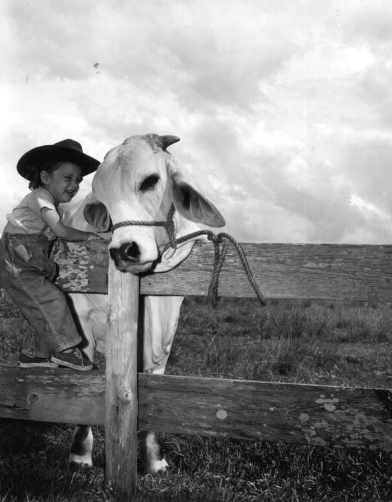 fl cattle ranch - Google Search