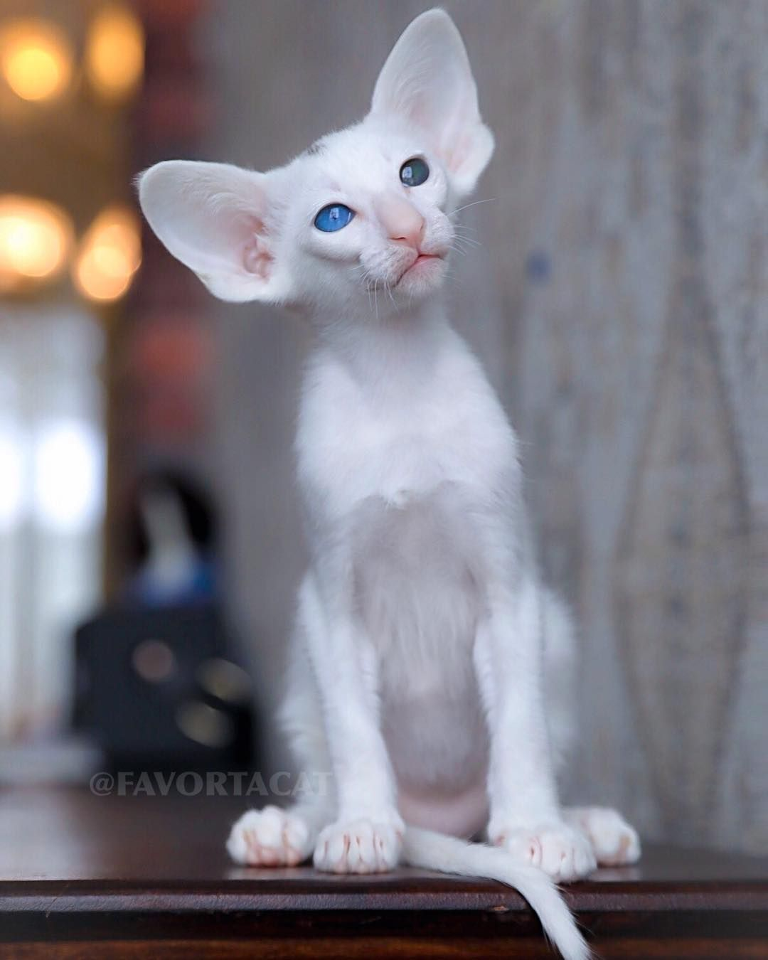 Pin By Invisible Cloack On Oh My Cat Crazy Cats Cute Creatures Cat Pics