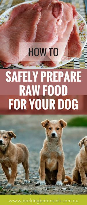 How to safely prepare raw food for your dog dog food raw dog food homemade dog forumfinder Images