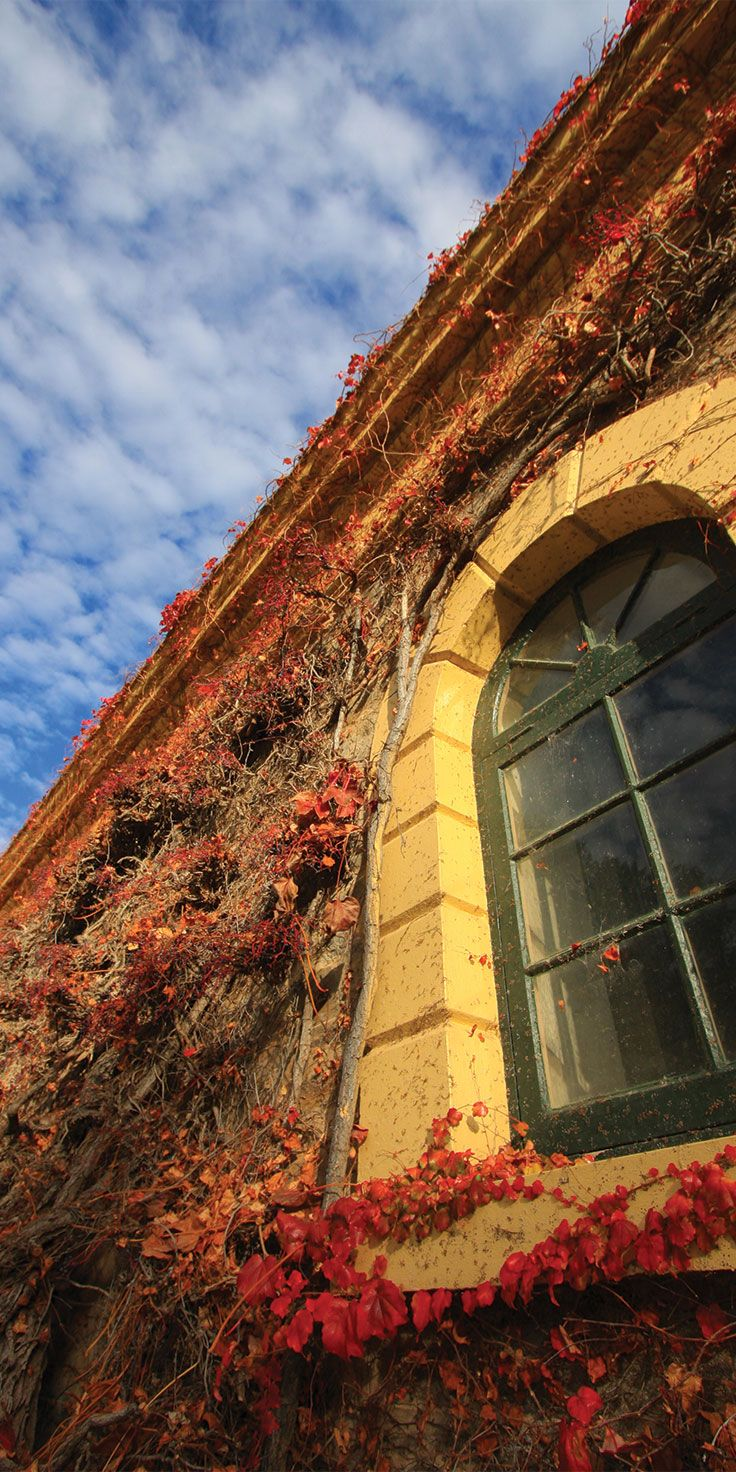Historic buildings at Seppelsfield Winery, Barossa Valley - by