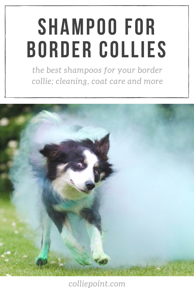 Best Shampoo For Border Collies In 2019 Cleaning Coat Care And More Border Collie Border Collie Facts Border Collie Training