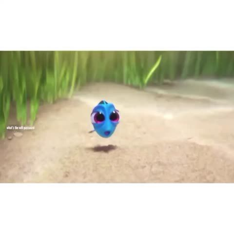 findingdory, Dory, relatable, rip, missionfailed