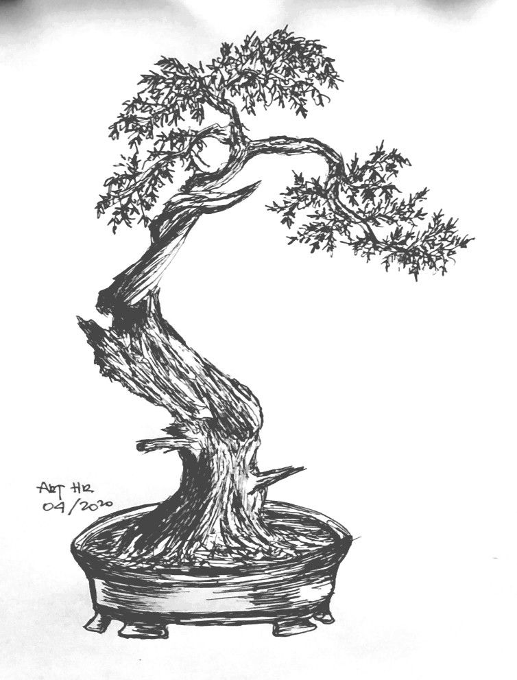 Sketch Bonsai By Art Hr En 2020 Bonsai Dibujos