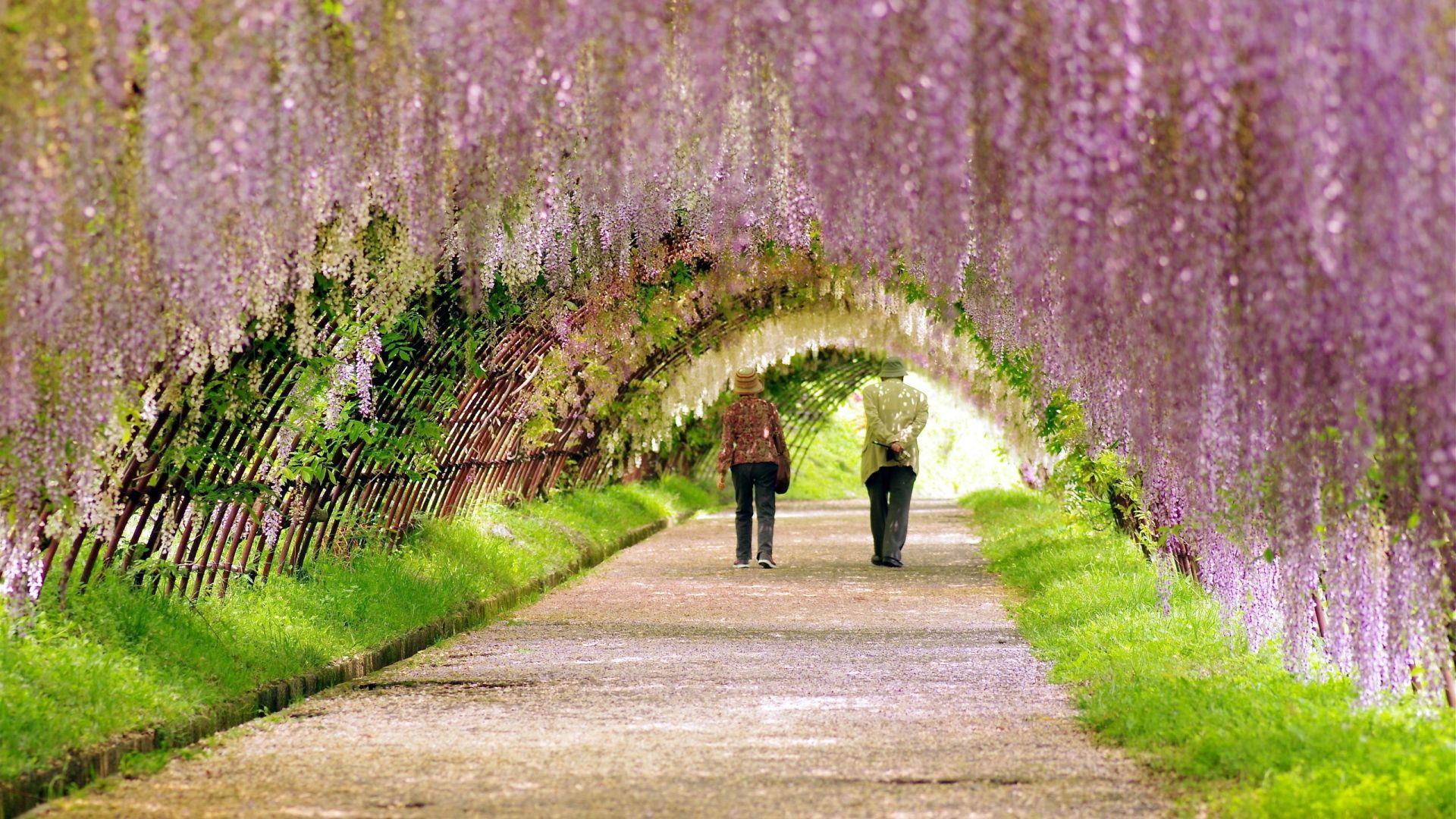 Best Wallpaper High Resolution Garden - 5e510109e0ef1d870a6f71d9a290ffec  Graphic_605219.jpg