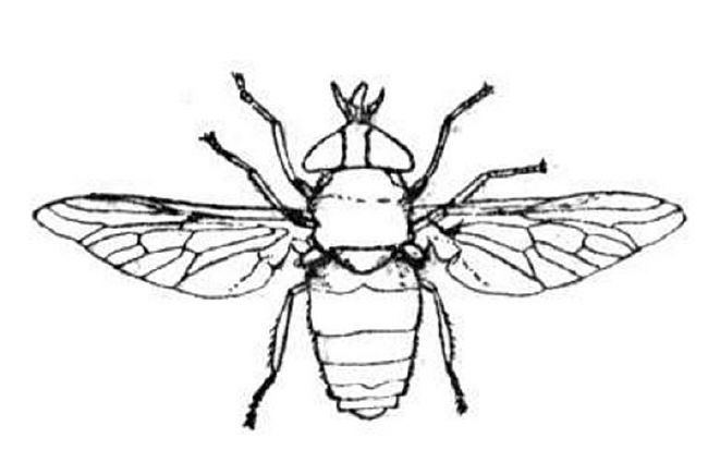 I For Insect Bug Coloring Pages Color Bug Coloring Pages