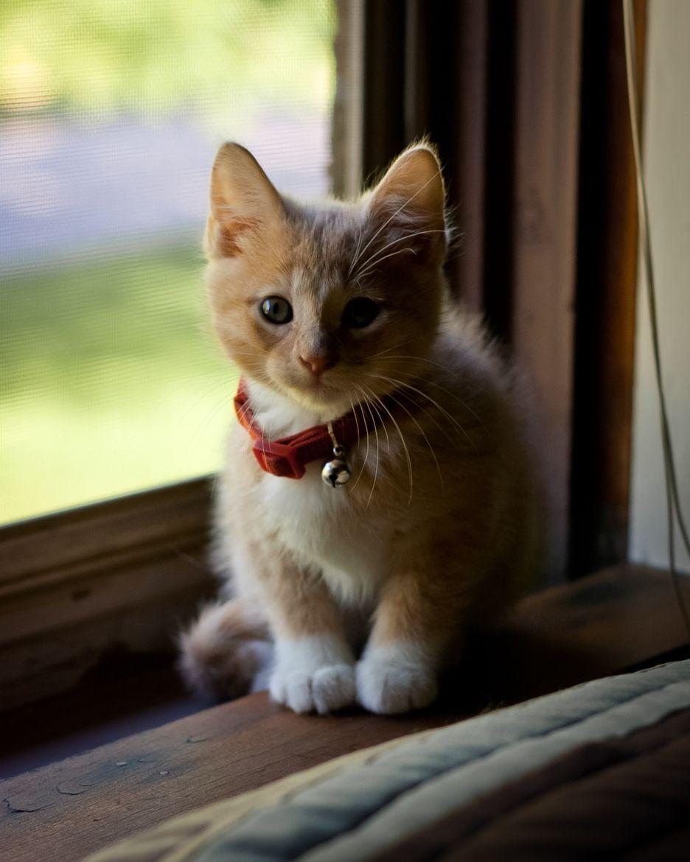 Kitty Klaus By Jake Bouma CC BY