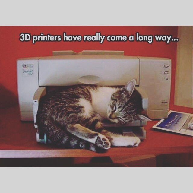#3dprinting #kittehs #catsofinstagram by derrolyn