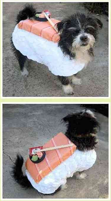 40 Most Adorable Dog Halloween Costumes & DIY Cat Costumes -   19 diy Halloween Costumes cat ideas