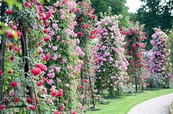 47 Amazing Rose Garden Ideas On This Year Rose Garden Design Garden Design Planting Flowers