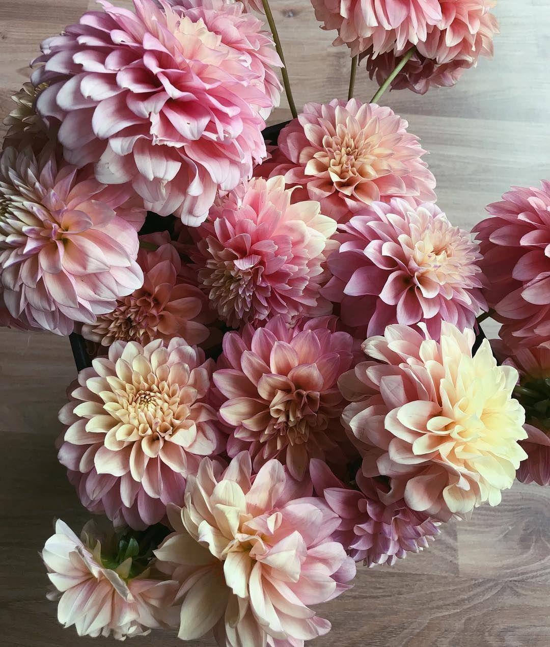 "Pretty Little Blooms Sarah on Instagram ""Dahlia"