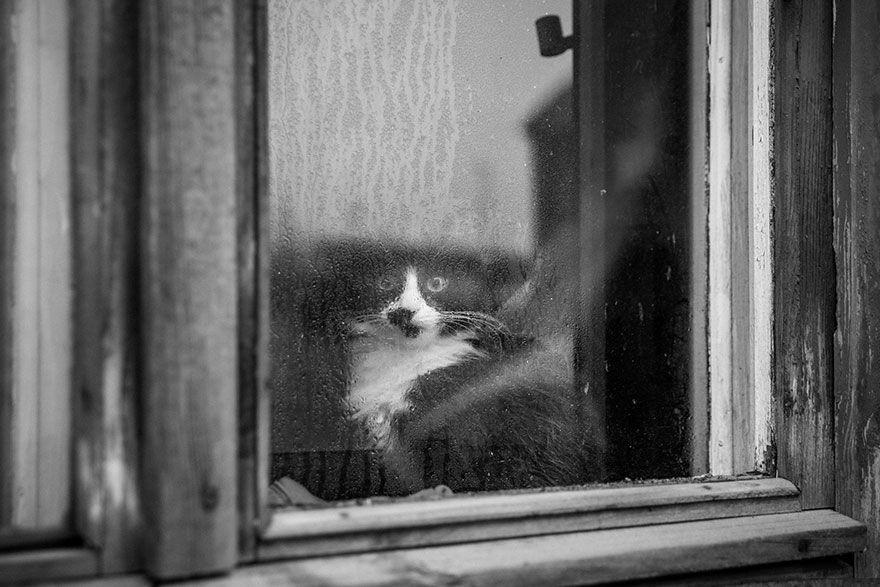 La Misteriosa Vita Dei Gatti Catturata Dalla Fotografia In