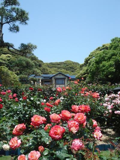 鎌倉 Kamakura/ 鎌倉文学館バラまつり Rose Festival