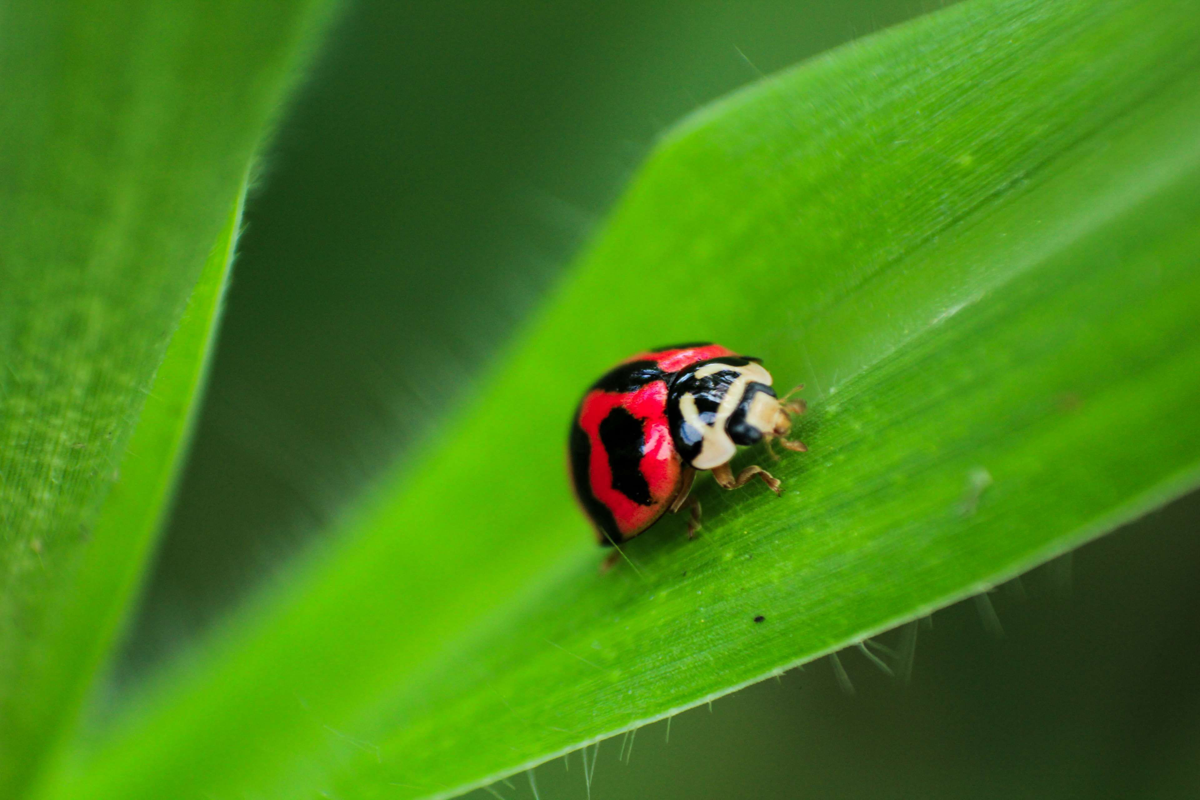 beetle #biology #color #colorful #colourful #dew #environment #grass